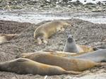 AnoNuevo-Seals-Group1