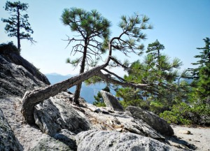 12_Crags-CrookedTree1