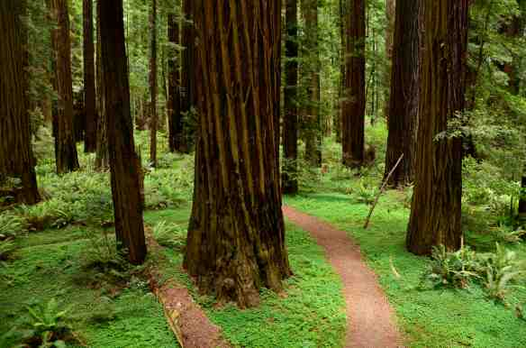 ©Mike Shoys, Grizzly Creek Redwoods State Park