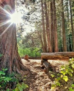 First Place: Plumas-Eureka State Park by Amy George