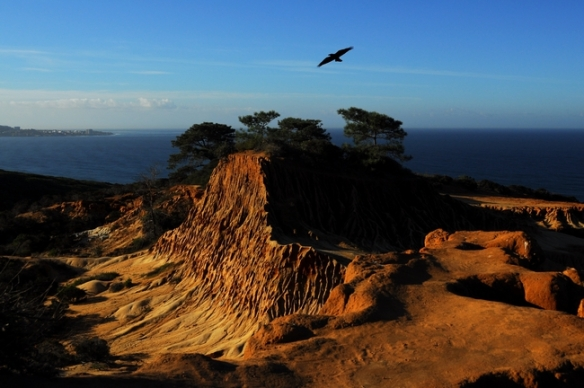 Torrey Pines State Reserve. Photo by Erica Shalit.
