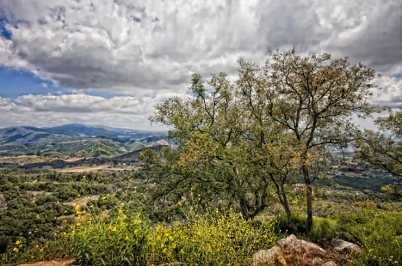 Palomar Mountain State Park. Photo by Julianne Bradford.