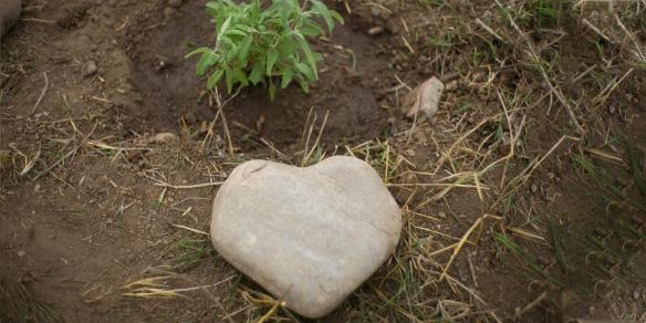 Valentine Blog Heart Rock