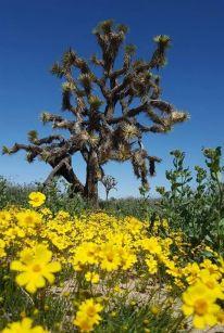Pg 7 - Michael Stadnick Saddleback Butte State Park